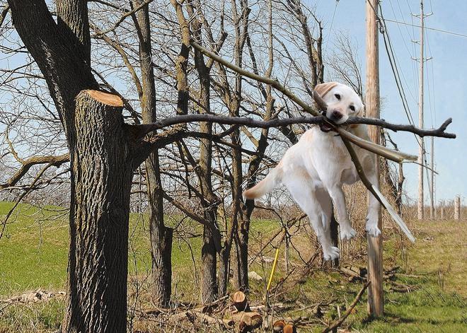 Chú chó ngáo ngơ trở thành nạn nhân của các thánh chế ảnh - Ảnh 8.