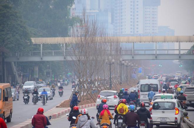 Chùm ảnh: Tận thấy hàng trăm cây phong lá đỏ mới được trồng trên phố Trần Duy Hưng ở Hà Nội - Ảnh 1.
