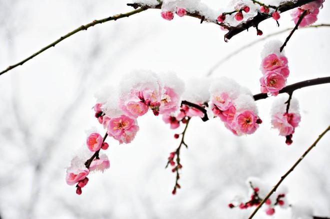 U23 Việt Nam đỏ chói giữa tuyết trắng Thường Châu: Bộ phim sử thi đẹp đến lặng người từ hai sắc màu bi tráng - Ảnh 3.