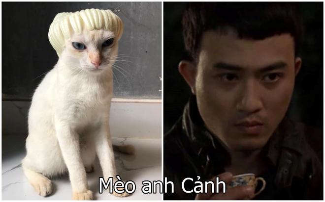 Xuất hiện boss mèo có biệt tài diễn xuất, hóa thân thành 12 nhân vật chỉ với miếng xốp bọc lê - Ảnh 4.