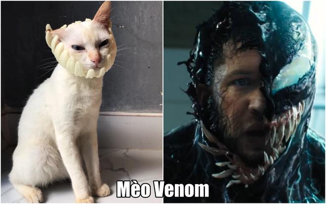 Xuất hiện boss mèo có biệt tài diễn xuất, hóa thân thành 12 nhân vật chỉ với miếng xốp bọc lê - Ảnh 2.