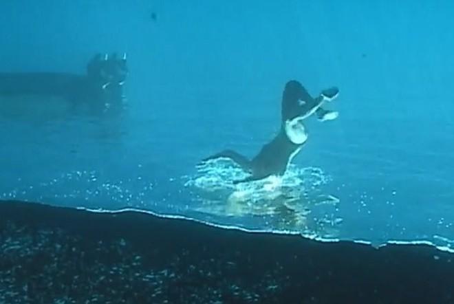 Clip gây lú nhất MXH: Thanh niên đang đi bộ dưới đáy biển thì bất ngờ nhảy tiếp xuống biển, xem đi xem lại mới phát hiện ra tại sao - Ảnh 3.