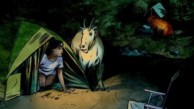 Mỹ: vườn quốc gia phải di dời hàng trăm con dê vì... rình mò du khách đi vệ sinh - Ảnh 2.