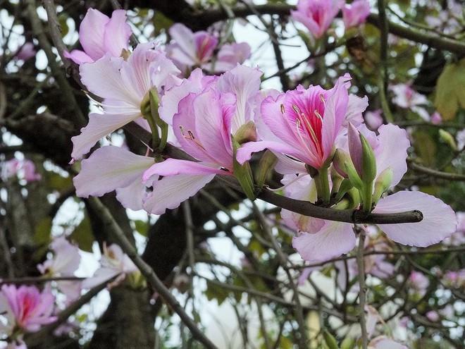 """11 15420879665611055669487 - Có ai nghĩ rằng loài hoa Tây Bắc năm nào giới trẻ cũng tìm để """"sống ảo"""" lại có thể ăn được và rất ngon là đằng khác"""