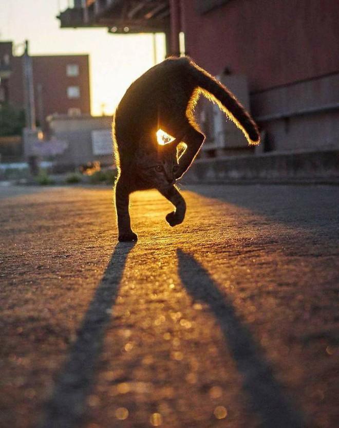 Chùm ảnh: Khi lũ boss mèo chăm chỉ luyện tập võ công, chờ đến ngày đi chiếm lấy thế giới - Ảnh 4.