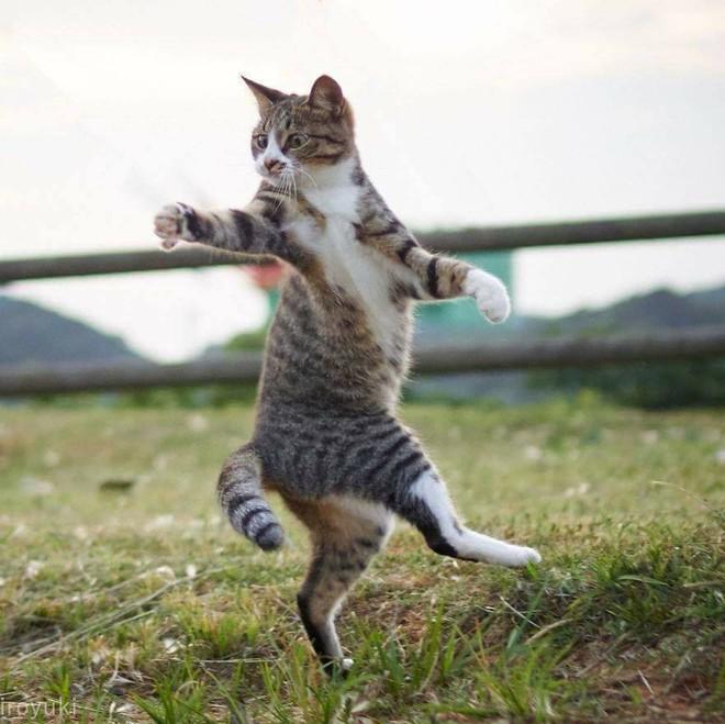 Chùm ảnh: Khi lũ boss mèo chăm chỉ luyện tập võ công, chờ đến ngày đi chiếm lấy thế giới - Ảnh 6.