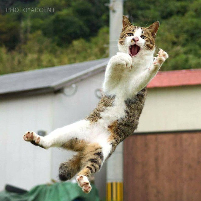 Chùm ảnh: Khi lũ boss mèo chăm chỉ luyện tập võ công, chờ đến ngày đi chiếm lấy thế giới - Ảnh 10.