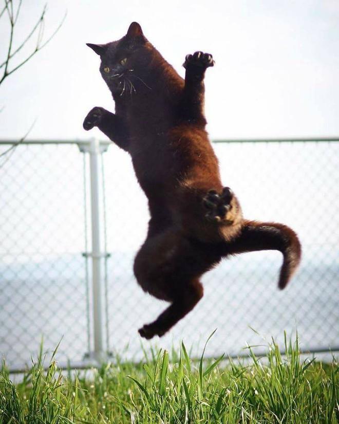 Chùm ảnh: Khi lũ boss mèo chăm chỉ luyện tập võ công, chờ đến ngày đi chiếm lấy thế giới - Ảnh 12.