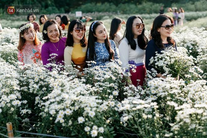 """Vườn cúc hoạ mi ở Hà Nội """"thất thủ"""" cuối tuần: 1 mét vuông có chục nhiếp ảnh gia và mẫu - Ảnh 3."""
