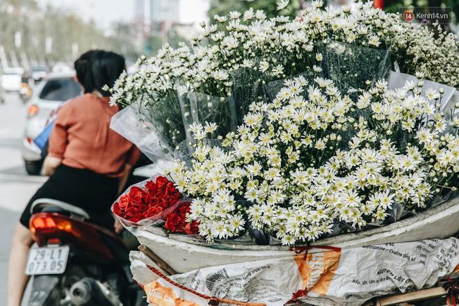 Cúc hoạ mi: Lời hẹn ước tháng 11 gieo vào lòng Hà Nội những mộng mơ tươi sáng đầu đông - Ảnh 2.