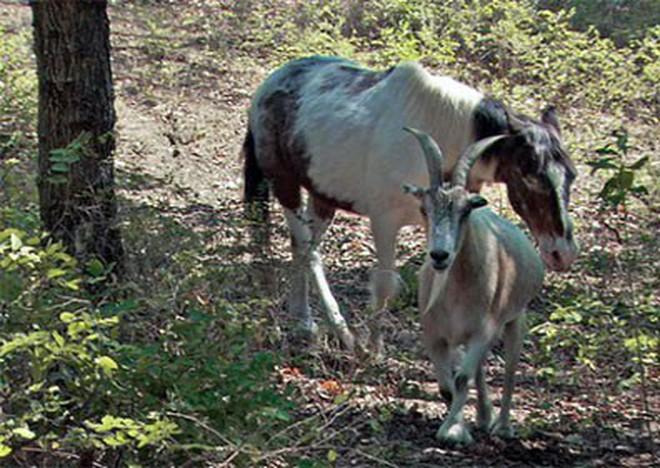 Khi động vật cũng biết nuôi thú cưng - những câu chuyện chứng minh thế giới tự nhiên cũng có thể dễ thương đến khó tin - Ảnh 5.