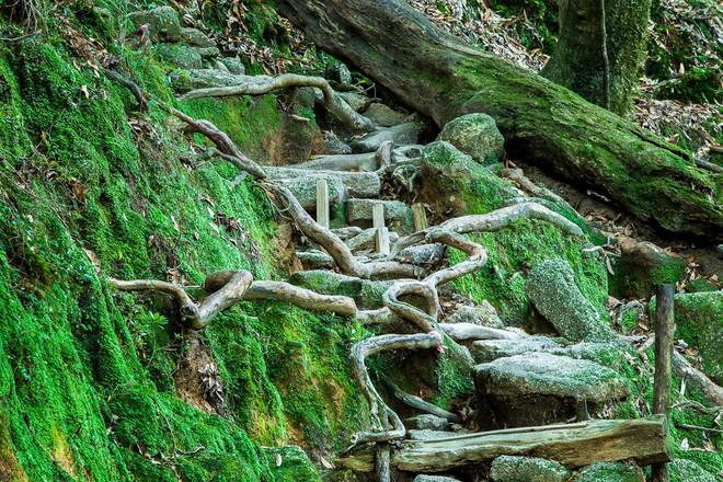 Mãn nhãn với khu rừng cổ tích đẹp lộng lẫy trên hòn đảo mÆ°a không nghỉ ở Nhật Bản - Ảnh 2.