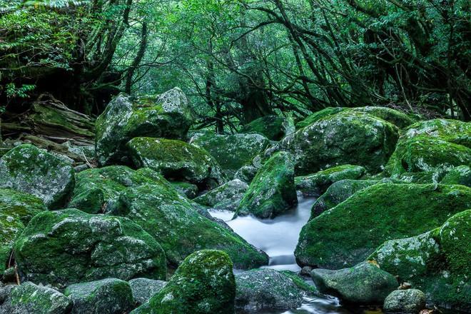 Mãn nhãn với khu rừng cổ tích đẹp lộng lẫy trên hòn đảo mÆ°a không nghỉ ở Nhật Bản - Ảnh 3.