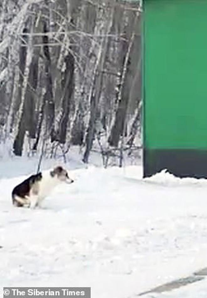 Chú chó Hachiko của nước Nga: Suốt nửa năm ngồi đợi chủ trong cái lạnh âm 30 độ C - Ảnh 1.