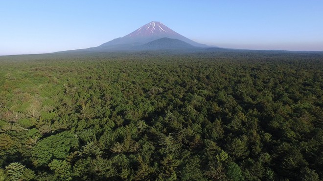 Người canh giữ khu rừng tự sát ở Nhật Bản: Hằng đêm vẫn cất lên tiếng hát để xoa dịu những tâm hồn bị tổn thương - Ảnh 2.