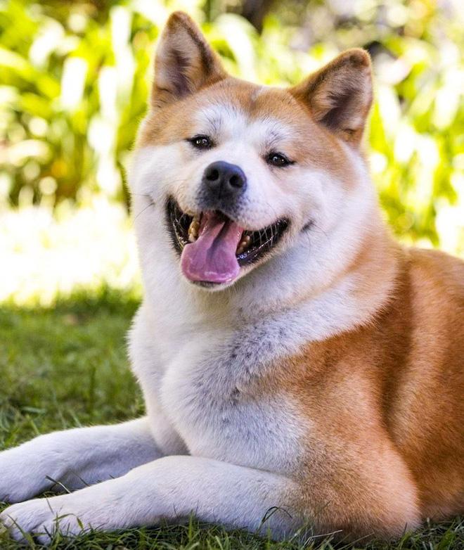 9 giống chó sở hữu vẻ ngoài siêu cÆ°ng nhÆ°ng không thích hợp với các gia đình có trẻ nhỏ - Ảnh 1.