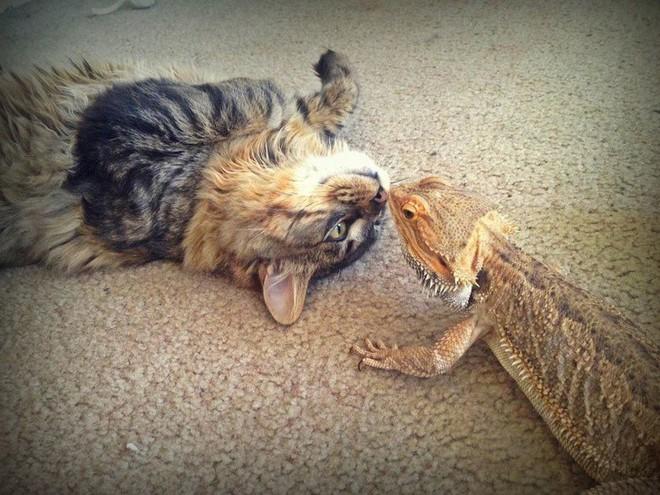 (Ảnh: photo elsoar, we really love animals, imgur)