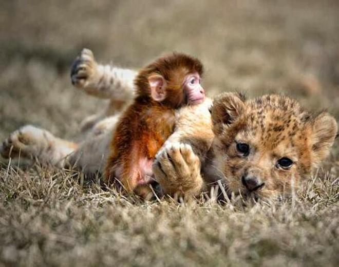 (Ảnh: primatology, animal fact guide, twitter)