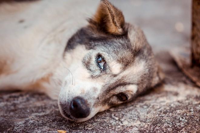 Nam thanh niên bất lực nhìn chú chó cưng nuôi 7 - 8 năm ngày một lả đi vì bị lưỡi câu mắc trong cổ họng - Ảnh 4.