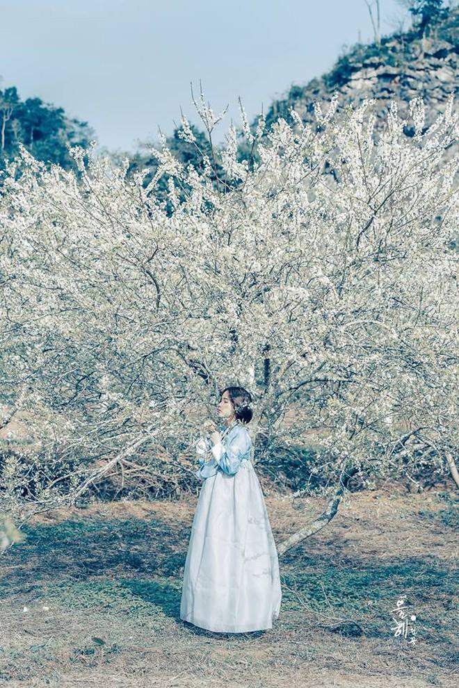 """""""Mùa hoa mận năm ấy"""" - Bộ ảnh khiến ai xem xong cũng nghĩ mãi về Mộc Châu - Ảnh 6."""