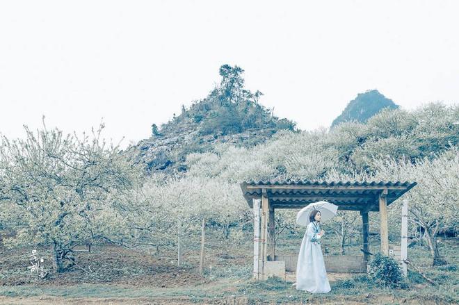 """""""Mùa hoa mận năm ấy"""" - Bộ ảnh khiến ai xem xong cũng nghĩ mãi về Mộc Châu - Ảnh 12."""
