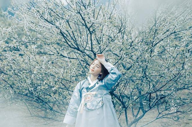 """""""Mùa hoa mận năm ấy"""" - Bộ ảnh khiến ai xem xong cũng nghĩ mãi về Mộc Châu - Ảnh 16."""