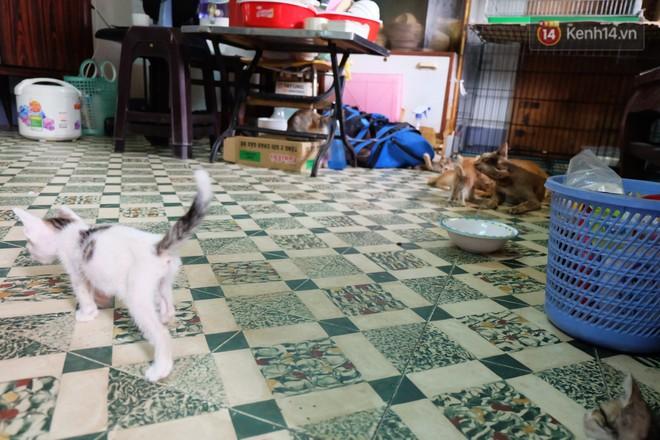 Chuyện cô giúp việc, dì bán vải chung sức cứu giúp hàng nghìn chú mèo suốt 17 năm ở Sài Gòn - Ảnh 2.