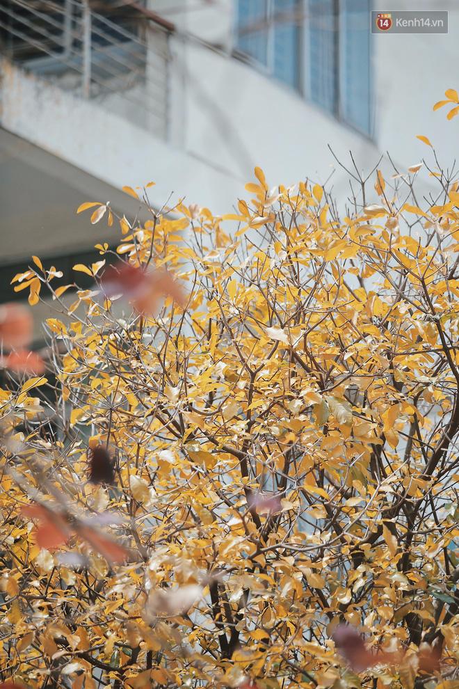 Bách Khoa, Sư Phạm mùa cây thay lá, đẹp dịu dàng như thu ở trời Âu - Ảnh 7.
