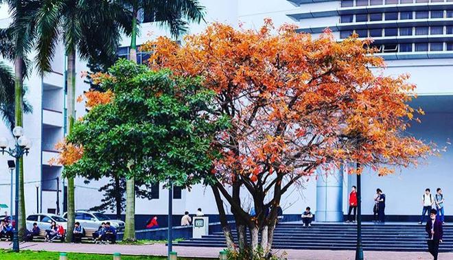 Bách Khoa mùa cây thay lá, đẹp dịu dàng như thu ở trời Âu - Ảnh 7.