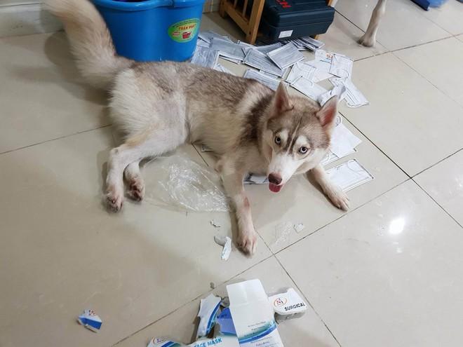 Câu chuyện cảm động về chú chó Alaska thông minh, cứu cả gia đình chủ trong đám cháy kinh hoàng tại chung cư ở Sài Gòn - Ảnh 4.