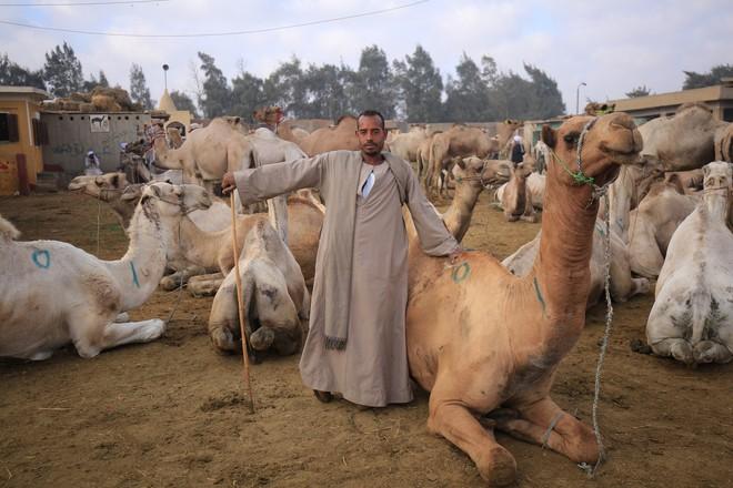 Ai Cập đẹp hơn tất cả những gì chúng ta vẫn tưởng tượng trong bộ ảnh mới nhất của Tâm Bùi - Ảnh 3.