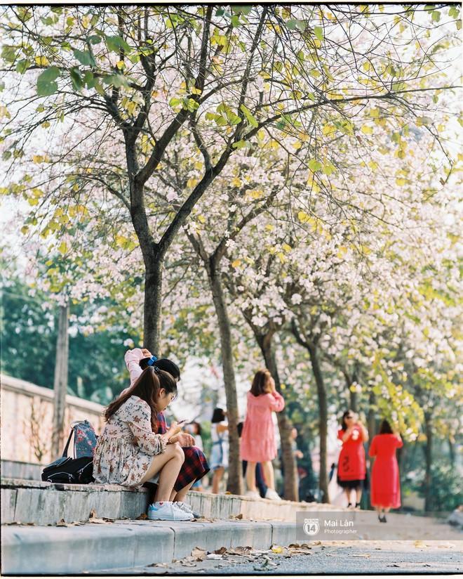 Chùm ảnh: Đây là Hà Nội, của những ngày trắng muốt hoa sưa... - Ảnh 13.