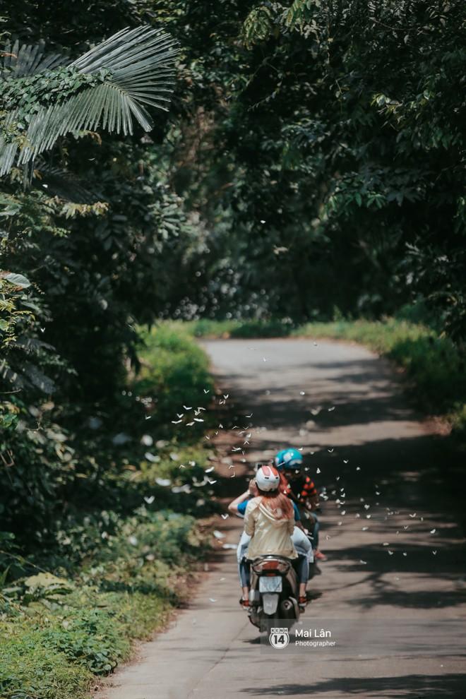 Rừng Cúc Phương vào mùa bướm: Đẹp như một giấc mơ - Ảnh 2.