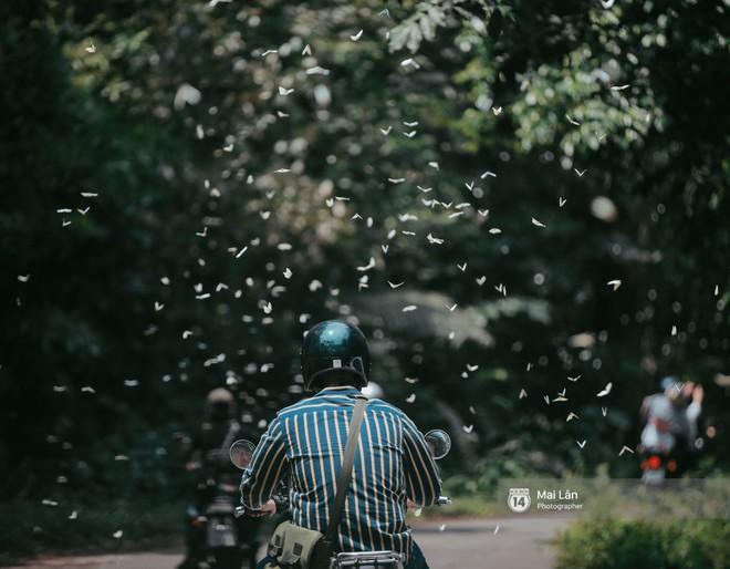 Rừng Cúc PhÆ°Æ¡ng vào mùa bướm: Đẹp nhÆ° một giấc mÆ¡ - Ảnh 4.