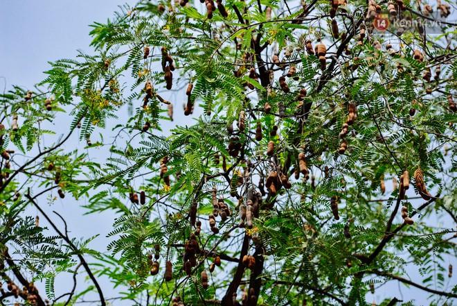 """Có một mùa """"chua chua ngọt ngọt"""" ở Sài Gòn: Mùa lá me bay gợi đầy ký ức - Ảnh 11."""