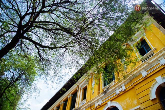 """Có một mùa """"chua chua ngọt ngọt"""" ở Sài Gòn: Mùa lá me bay gợi đầy ký ức - Ảnh 5."""