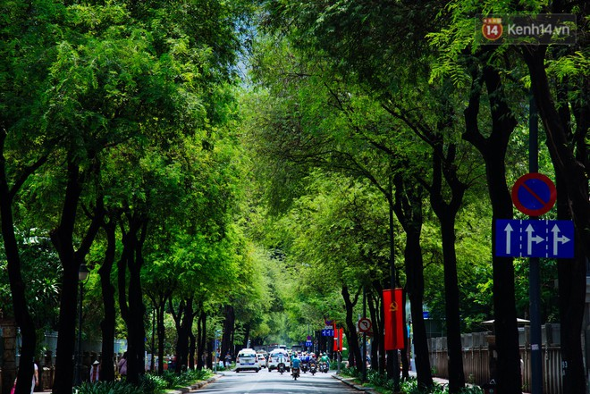 Có một mùa chua chua ngọt ngọt ở Sài Gòn: Mùa lá me bay gợi đầy ký ức - Ảnh 4.