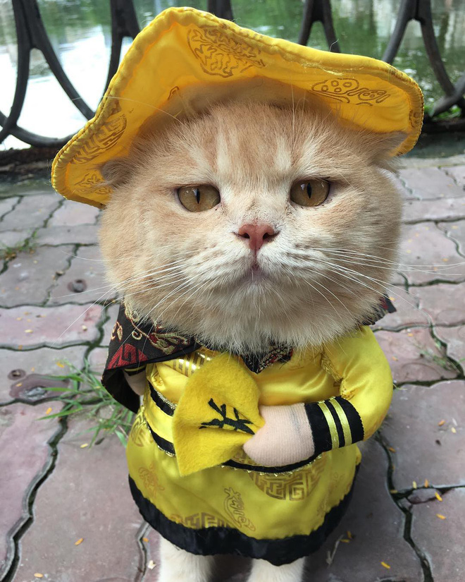 Bị ném đá là ngược đãi thú cưng, chủ nhân của chú mèo tên Chó nổi nhất MXH nói gì? - Ảnh 4.