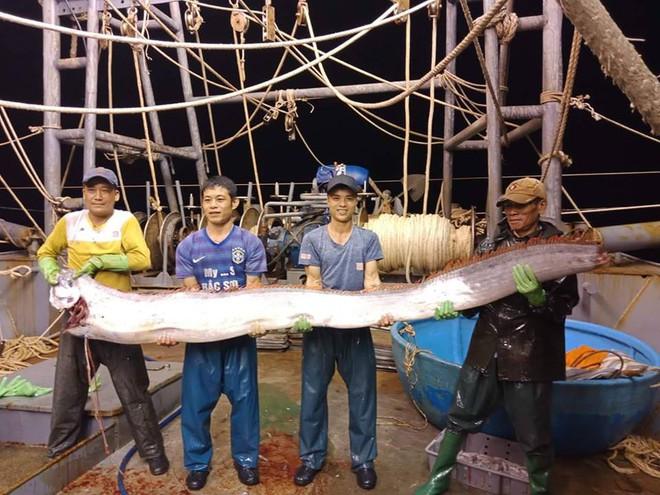 Thanh Hoá: Ngư dân bắt được cá hố khổng lồ nặng gần 1 tạ, 4 người mới nhấc lên nổi - Ảnh 1.