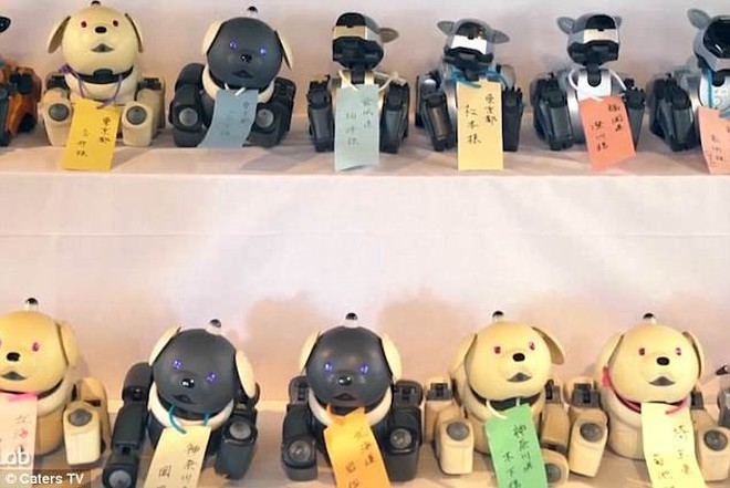 Kỳ lạ ngôi chùa Nhật Bản làm đám tang cho chó robot: máy móc cũng có linh hồn - Ảnh 1.
