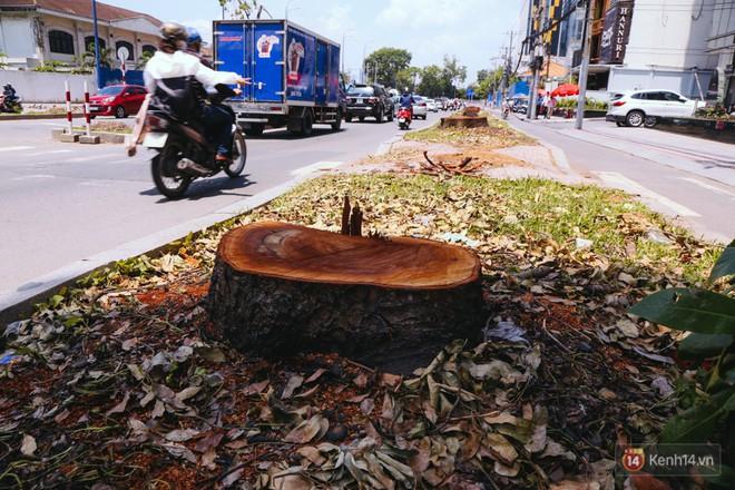 Chùm ảnh: Đường Tôn Đức Thắng trở nên lạ lẫm với người Sài Gòn sau khi hàng cây xanh biến mất hoàn toàn - Ảnh 5.