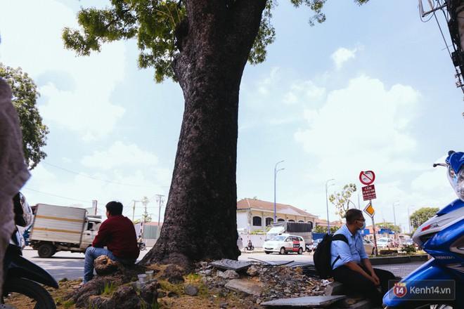 Chùm ảnh: Đường Tôn Đức Thắng trở nên lạ lẫm với người Sài Gòn sau khi hàng cây xanh biến mất hoàn toàn - Ảnh 7.