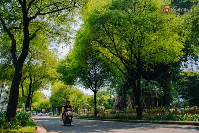 Có một mùa chua chua ngọt ngọt ở Sài Gòn: Mùa lá me bay gợi đầy ký ức - Ảnh 10.