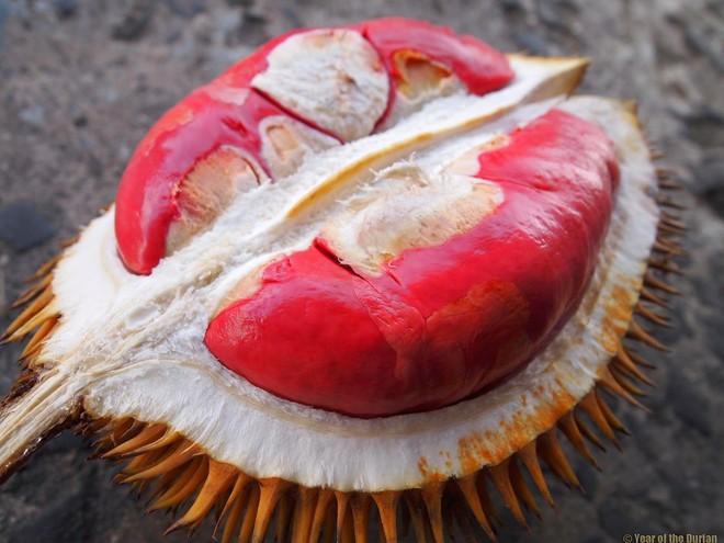 Sầu riêng ruột đỏ hot rần rần đảm bảo sẽ khiến fan sầu riêng thích thú - Ảnh 5.