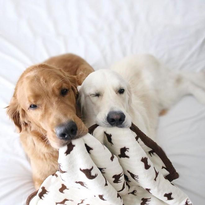 Câu chuyện cảm động của 2 chú chó lúc nào cũng dính lấy nhau như hình với bóng, sở hữu gần 500 nghìn lượt follow trên Instagram - Ảnh 9.