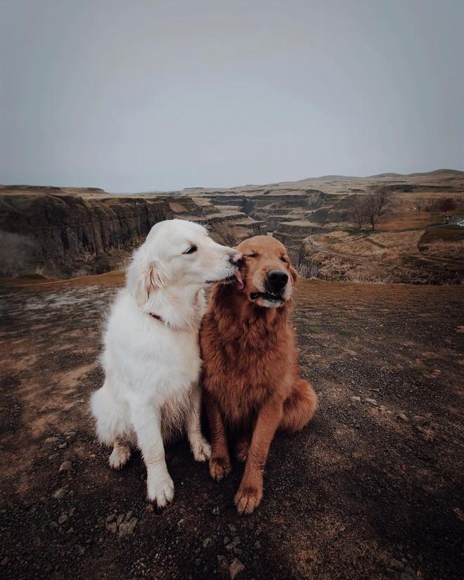Câu chuyện cảm động của 2 chú chó lúc nào cũng dính lấy nhau như hình với bóng, sở hữu gần 500 nghìn lượt follow trên Instagram - Ảnh 1.