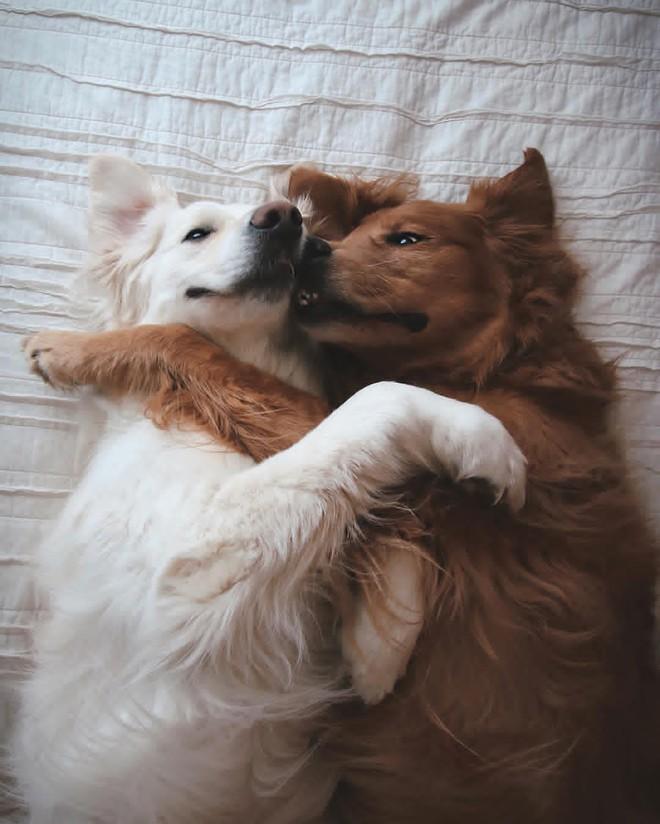 Câu chuyện cảm động của 2 chú chó lúc nào cũng dính lấy nhau như hình với bóng, sở hữu gần 500 nghìn lượt follow trên Instagram - Ảnh 6.