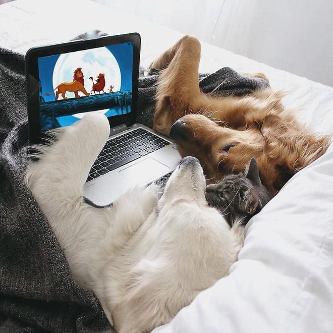 Câu chuyện cảm động của 2 chú chó lúc nào cũng dính lấy nhau như hình với bóng, sở hữu gần 500 nghìn lượt follow trên Instagram - Ảnh 8.