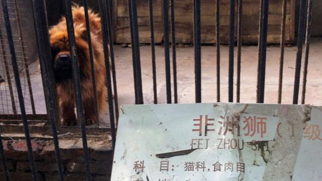 Thanh niên háo hức vào vườn thú xem ngựa vằn ai ngờ phát hiện cả chuồng toàn là lừa cải trang - Ảnh 5.