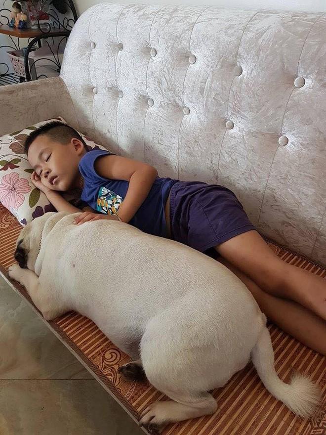 """Chăm """"boss"""" 2 năm ròng, """"sen"""" ngã ngửa khi một ngày thấy mình nuôi nhầm con... lợn - Ảnh 1."""